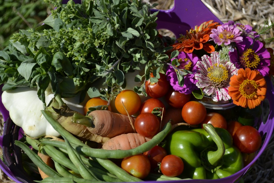 harvest_basket Courtesy Airlie 1
