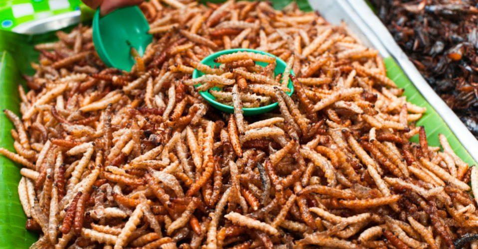 edible-bugs-960x500